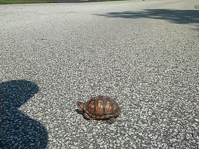 Turtle Rescue (1/2)